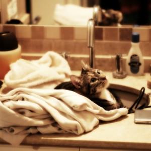 洗面所の内覧ポイント*爽やか空間への分かれ道!しっかり練りたい収納計画